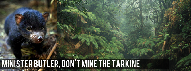 tarkine-devil-and-forest